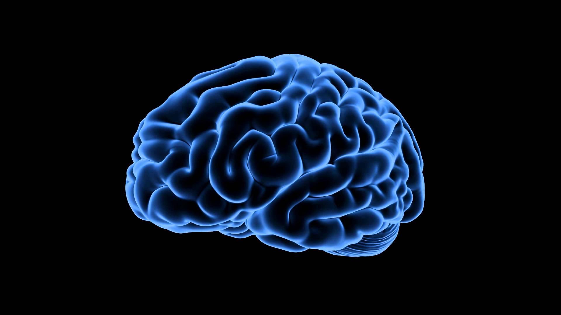 Ons Brein en Verandering